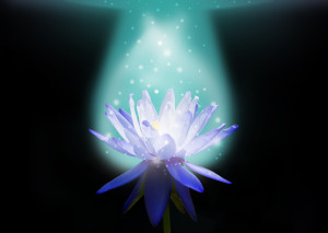 Magic Lotus Flower_ENM Marketing